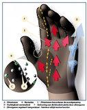 Vingerloze zilverhandschoenen werking